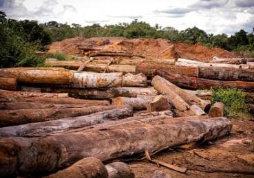 Legislação em MT favorece invasão de terras e desmatamento, diz estudo